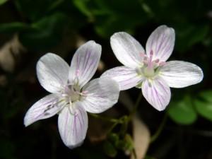 2004_Spring_flowers